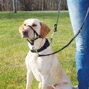 Trixie Hunde Top Trainer Ausbildungsgeschirr L